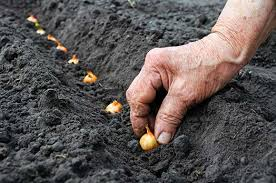 Image result for pictures of farmers planting