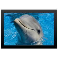 Холст 20х30 <b>Дельфин</b> 1 #2556984 от Аня Лукьянова