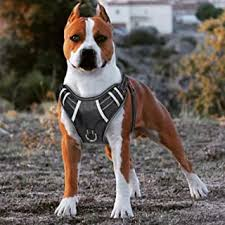 Personalized Dog Harness - Amazon.com