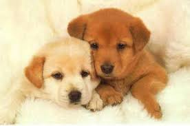 les plus beau chiens Images?q=tbn:ANd9GcRDS1qHi9FRYYSH85x1mFvOuBpzFh20DD_gQjs7grH6-4-e9jzb