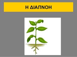 Αποτέλεσμα εικόνας για διαπνοη φυτων