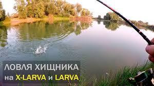 Ловля ХИЩНИКА на <b>приманки X</b>-<b>Larva</b> и Larva. ТМ <b>Fanatik</b> ...