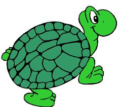 תוצאת תמונה עבור turtle
