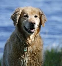 Tι διατροφικές ανάγκες έχει ο ηλικιωμένος σκύλος;