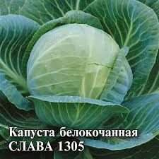 <b>Семена Капуста белокочанная Слава</b> 1305, 10г, Гавриш ...