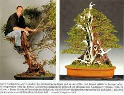 a full grown man sitting in a bonsai tree 122915 bonsai tree