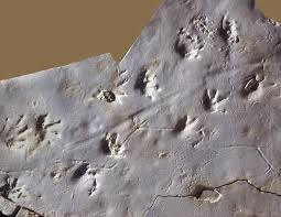 Image result for fossil pictures