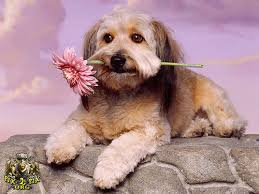 داستان زیبای سگ باهوش