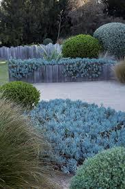 Small Picture Best 25 Mediterranean garden ideas on Pinterest Mediterranean