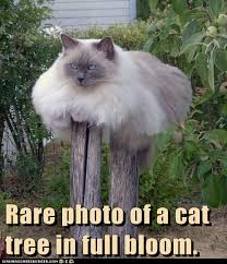Rare photo of Cat Tree Cat Meme - Cat Planet | Cat Planet via Relatably.com