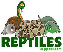 Resultado de imagen de reptiles in english