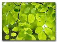 30+ <b>Green Leaves</b> ideas | <b>green leaves</b>, leaves, green