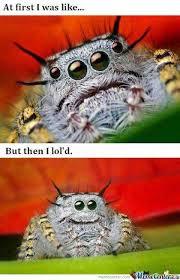 Ok, cure me please: SPIDERS! - Page 5 Images?q=tbn:ANd9GcREY3oVbyxebd0P0MCZJjIpd4BG7wXtAe6kGuaAjWbZF-8UmUd1