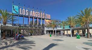 Image result for google and los angeles