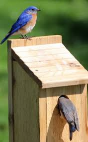 Free Bird House Plans   Bluebird  Purple Martin  Wren  MoreBird house plans for different species  This one is for bluebirds