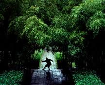 Chinese martial arts - Wikipedia