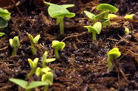 <b>Plant species</b> that work in vertical <b>planting</b>