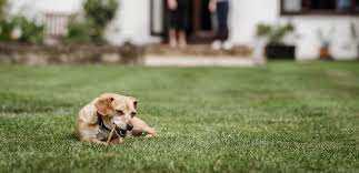 How to house and toilet train puppies and <b>adult dogs</b>