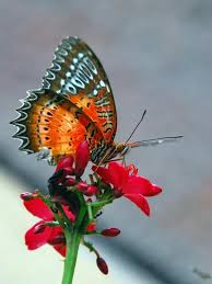 30 <b>Beautiful Butterfly</b> Pictures | Cuded | <b>Beautiful butterfly</b> pictures ...