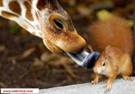 Image result for mouse and giraffe