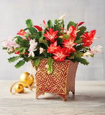 <b>Christmas Flower</b> Delivery | Christmas Plants | Harry & David