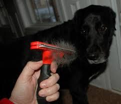 Картинки по запросу вычесывание собак