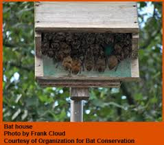 Build by Own  Guide to Get Free bat house plans do it yourselfBat House