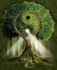 Imagini pentru arborele vietii