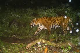 Can the upper Himalayas be the new home for <b>tigers</b> in South Asia?
