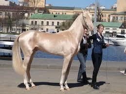 الخيول التركيه من اجمل خيول العالم وولاده حصان سبحان الله Images?q=tbn:ANd9GcRG1LgkHndlyeawkfsULFDHibc_Ifcz7rKMMNE7LvoWZJuzS-zT