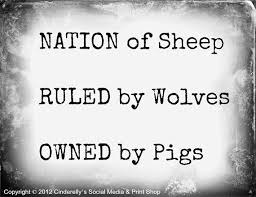 Image result for sheep nation