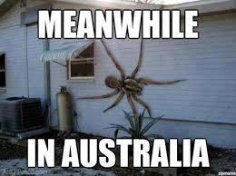 SpiderMeme.jpg via Relatably.com