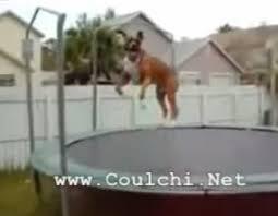 Résultat de recherche d'images pour 'image de chien boxer'
