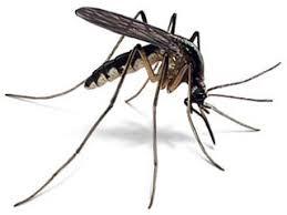 Afbeeldingsresultaat voor anti muggen
