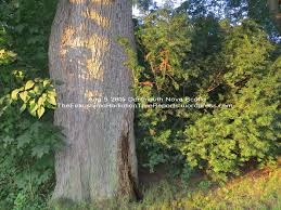 dartmouth nova scotia radiation killing trees the fukushima please