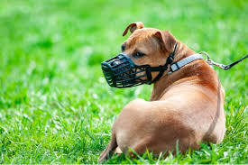 The 25 Best <b>Dog Muzzles</b> of 2019 - Pup Life Today