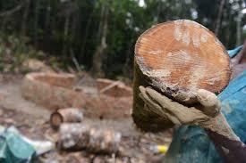 Resultado de imagem para carvao rural