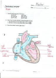 circulatory system heart diagram ms connell circulatory system heart diagram click