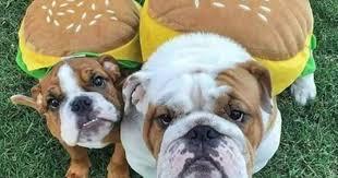 national cheeseburger day - Funny ... - I Can Has Cheezburger?