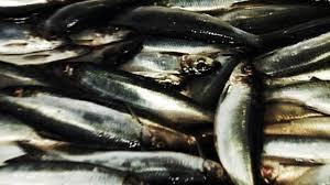 Skippers and firm fined almost £1m for part in £63m '<b>black fish</b>' scam ...