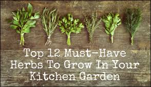 Small Picture 12 Must Have Herbs To Grow In Your Kitchen Garden