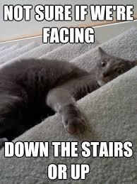 Crazy Cat memes | quickmeme via Relatably.com