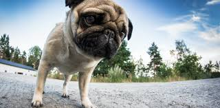 How <b>cute dogs</b> help us understand Adam Smith's 'invisible hand'