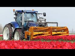 The Story of the <b>Tulips</b> | Planting to Harvest | One year at Maliepaard ...