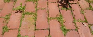 Résultats de recherche d'images pour «mauvaises herbes et dalles»