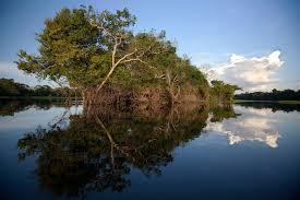 Resultado de imagem para fotos de zonas úmidas