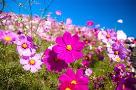 Kết quả hình ảnh cho Hình ảnh hoa cỏ mùa xuân