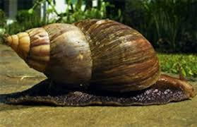 Image result for snail farming