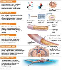 nervous and respiratory systems work together essay body systems nervous and respiratory systems work together anatomy