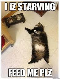 Hungry Cat memes   quickmeme via Relatably.com